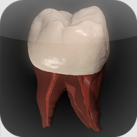 Real Tooth Morphology